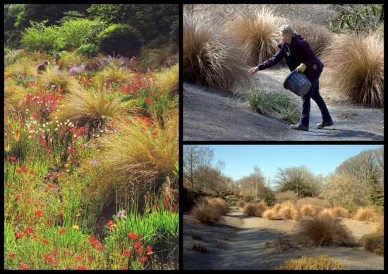 South African Grasses, The garden House, Devon