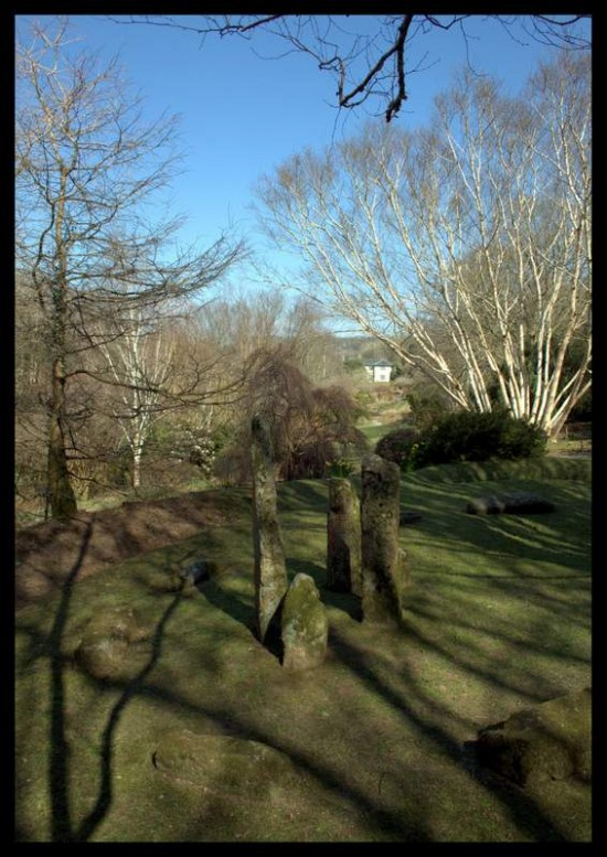 Betula birch trees and standing stones, The Garden House, Devon