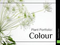 Sophie Dixon - Colour Planting Portfolio