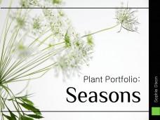 Sophie Dixon - Seasonal Planting Portfolio